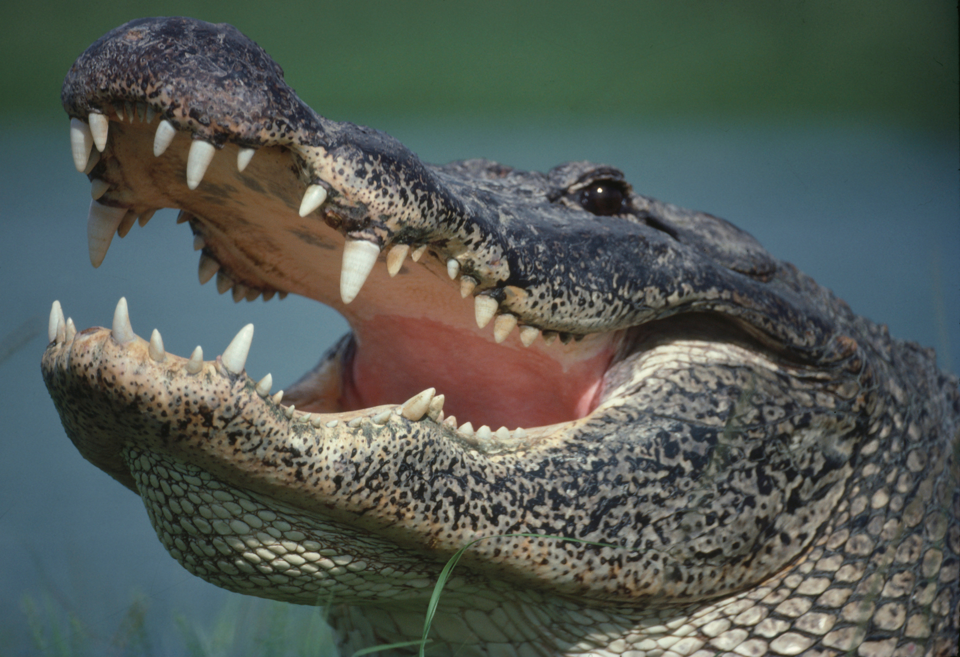 Police chief warns that flushing drugs could be creating 'meth-gators'