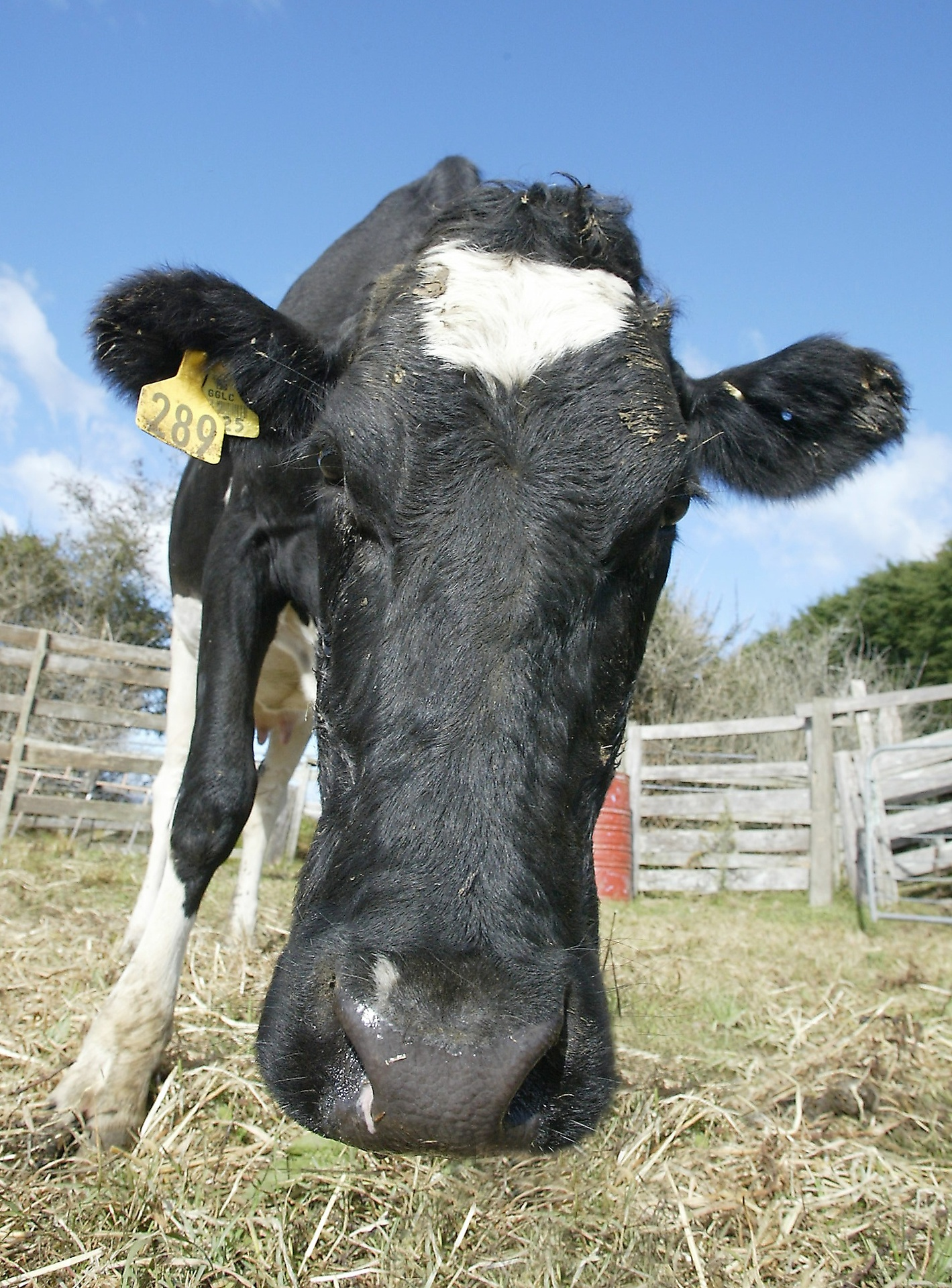 Record fine: Headaches and vomiting from dairy company smell