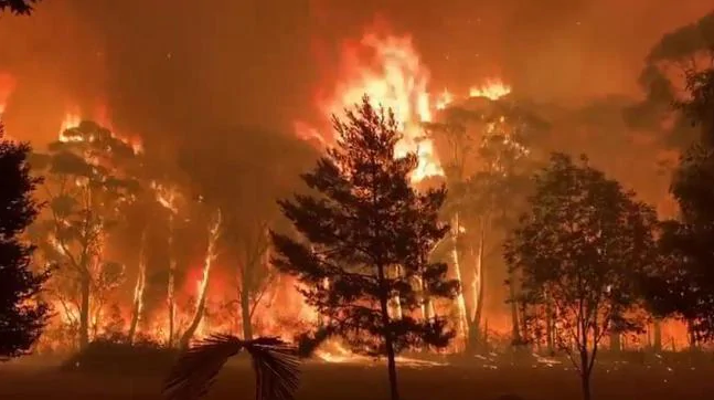 Wall of flames: Huge 'megafire' grows to 70 metre-high inferno