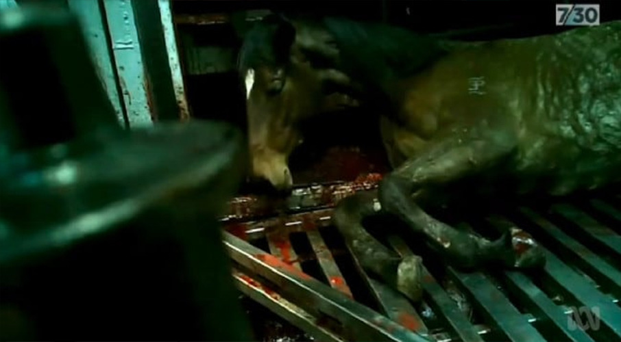 Shipped to their deaths: Brutal slaughter of thousands of healthy racehorses