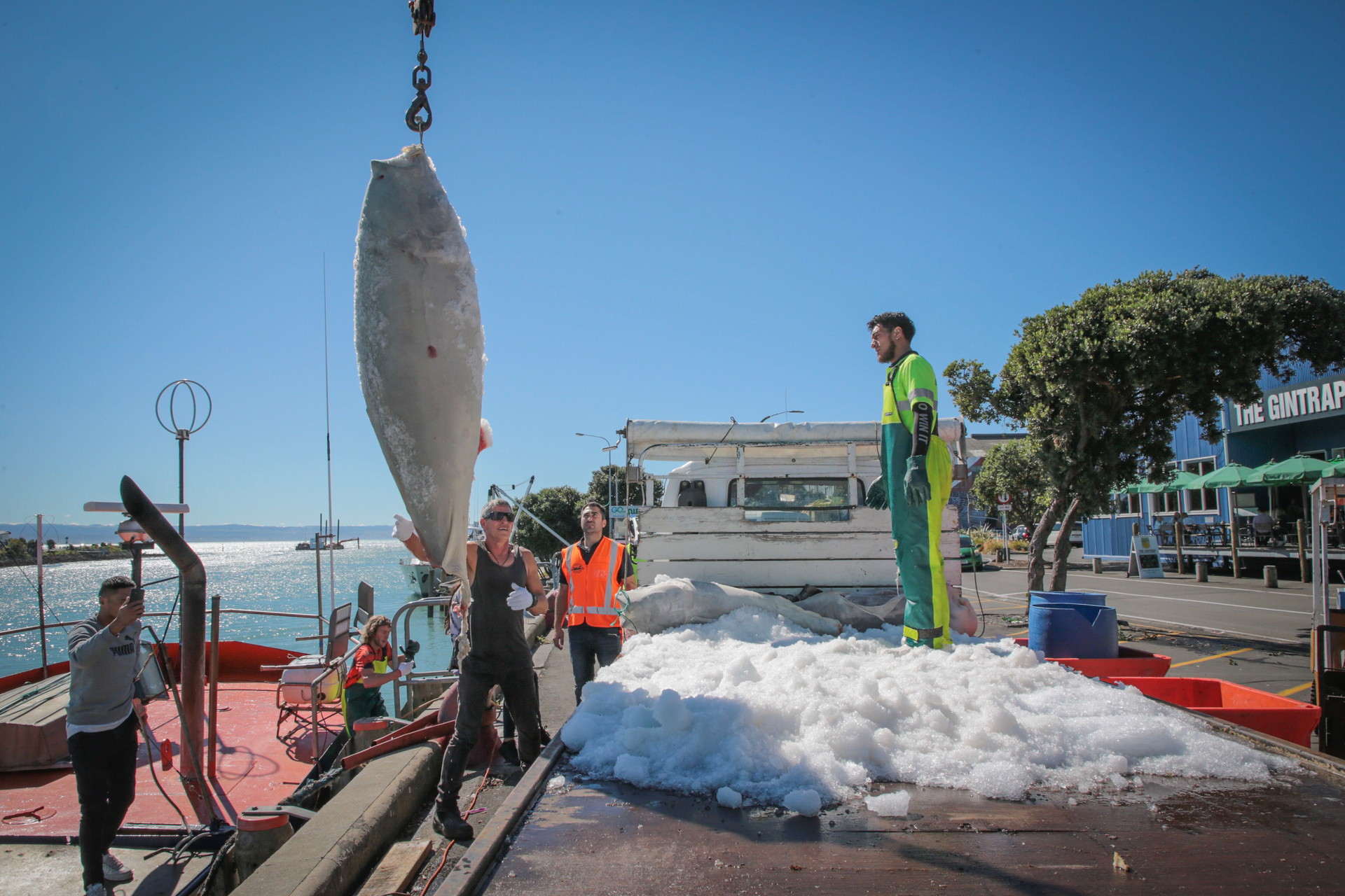 Takitimu Seafoods boat brings in massive 230kg tuna off Hawke's Bay coast