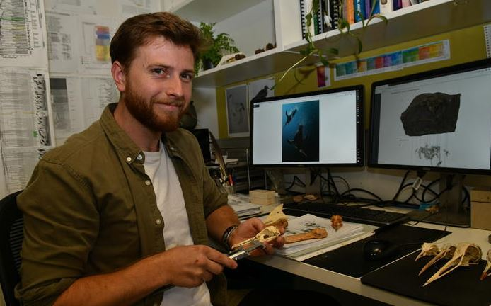 Ancient pengiun species found on Chatham Islands helping bridge gap in knowledge