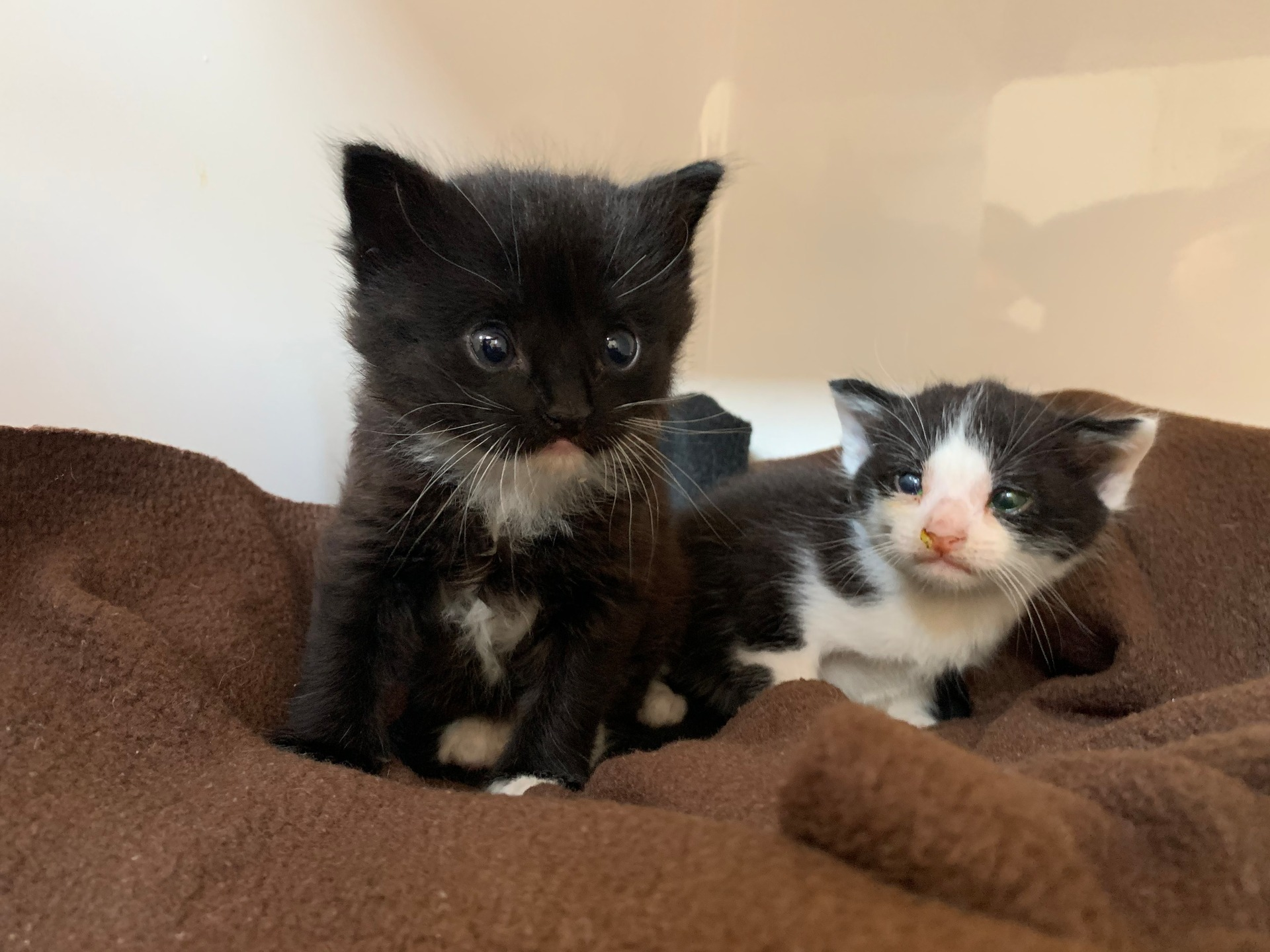 Lonely miaow: Kittens escape car wreckers