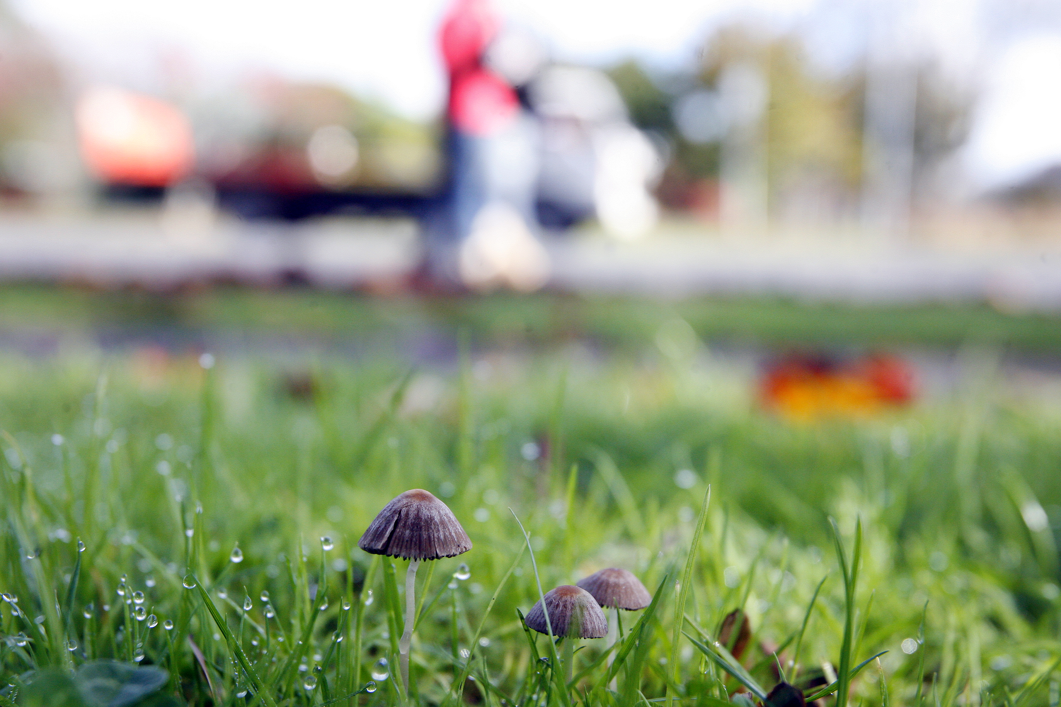 Magic mushrooms land Greymouth man in court - NZ Herald