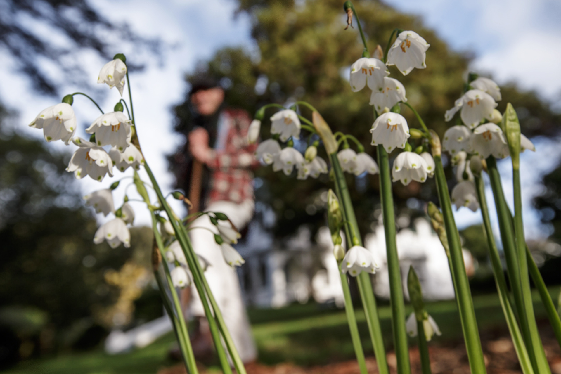 Auckland's blooming early start to flowering season