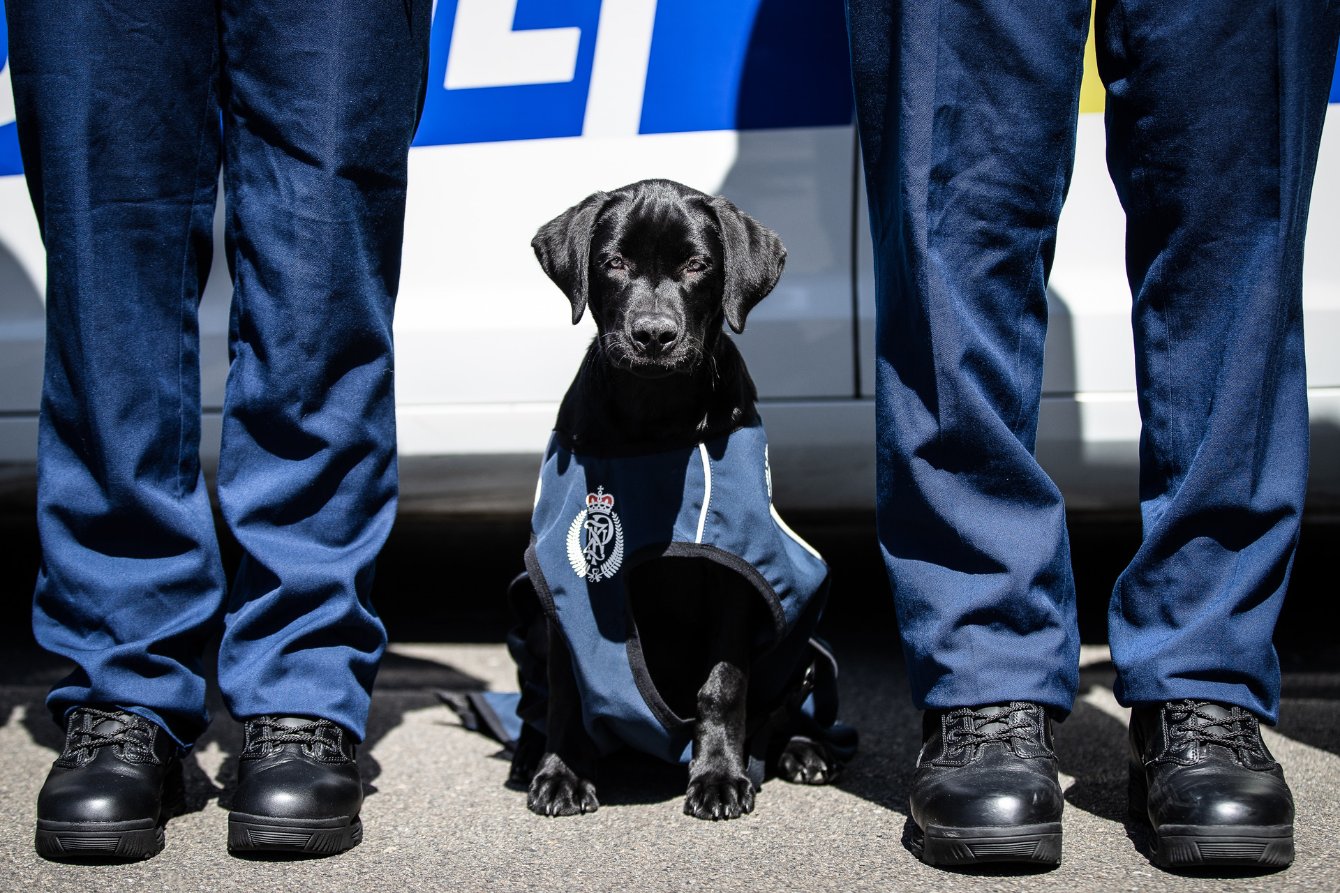 The softer, fluffier side of the NZ Police