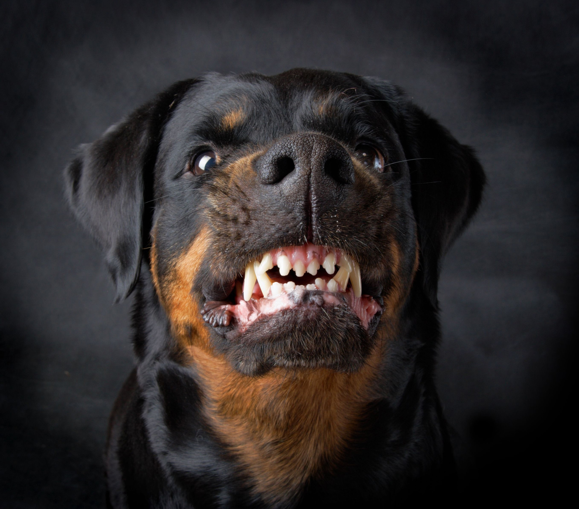 Two rottweilers caught after vicious attack on autistic man