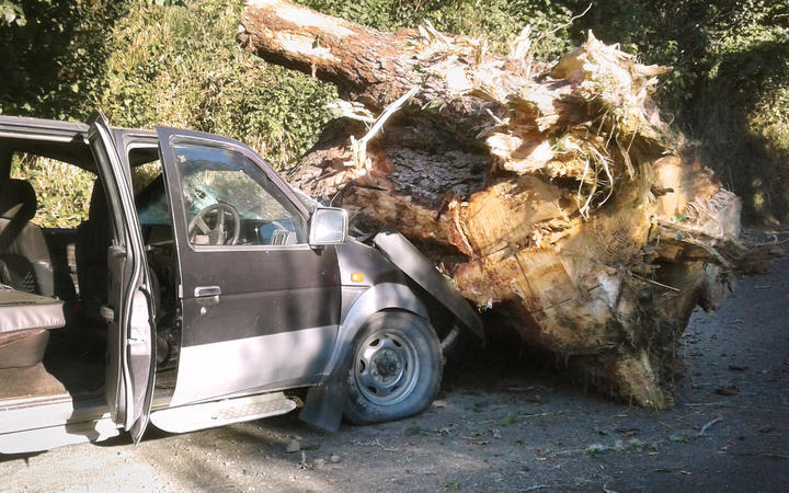 A giant tree crushed her in her truck. WorkSafe refuses to investigate