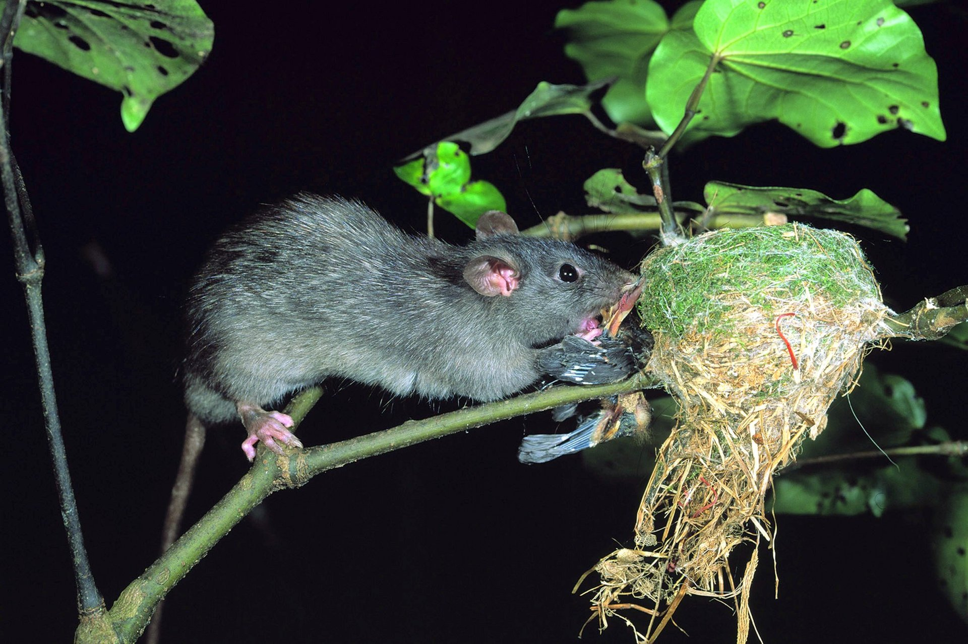 Why public buy-in is critical to NZ's great pest wipe-out