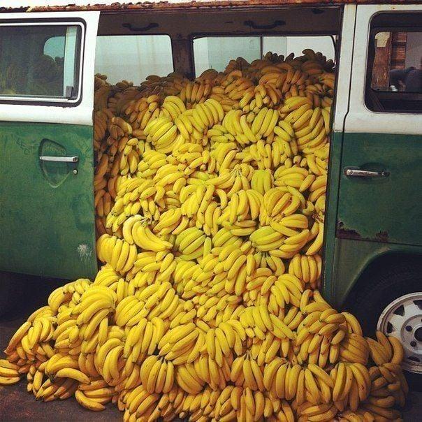 Fruit fiesta: Bounty of bananas up for grabs