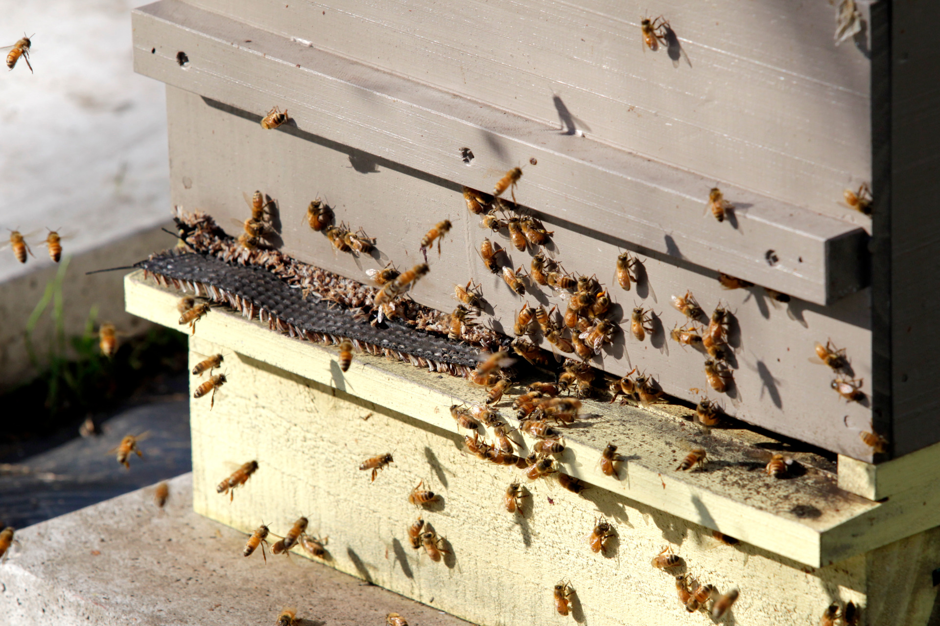 80 beehive boxes stolen: Search for thief in Napier