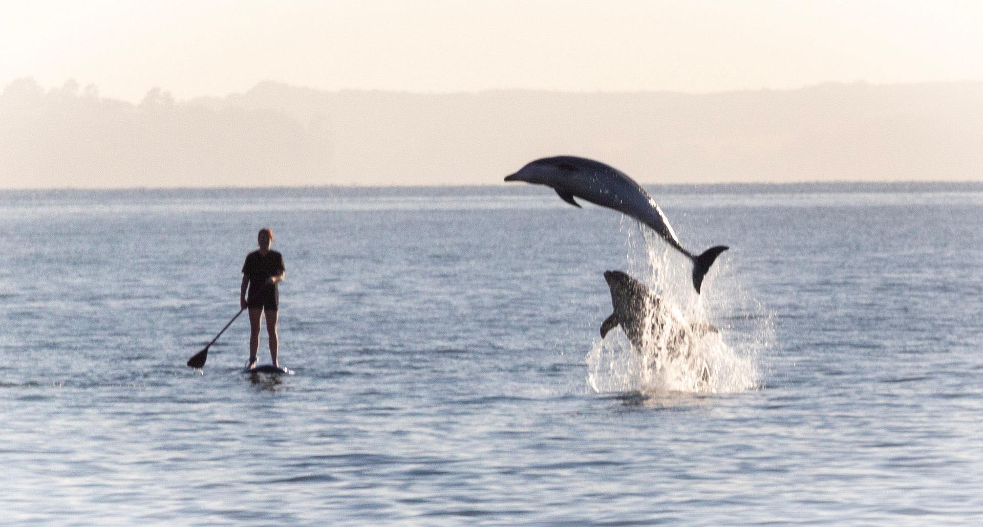 Rare sighting of dolphin pod making a splash at Mairangi Bay Beach, Auckland