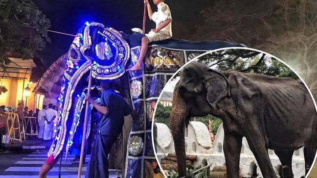Tikiri the emaciated elephant dies