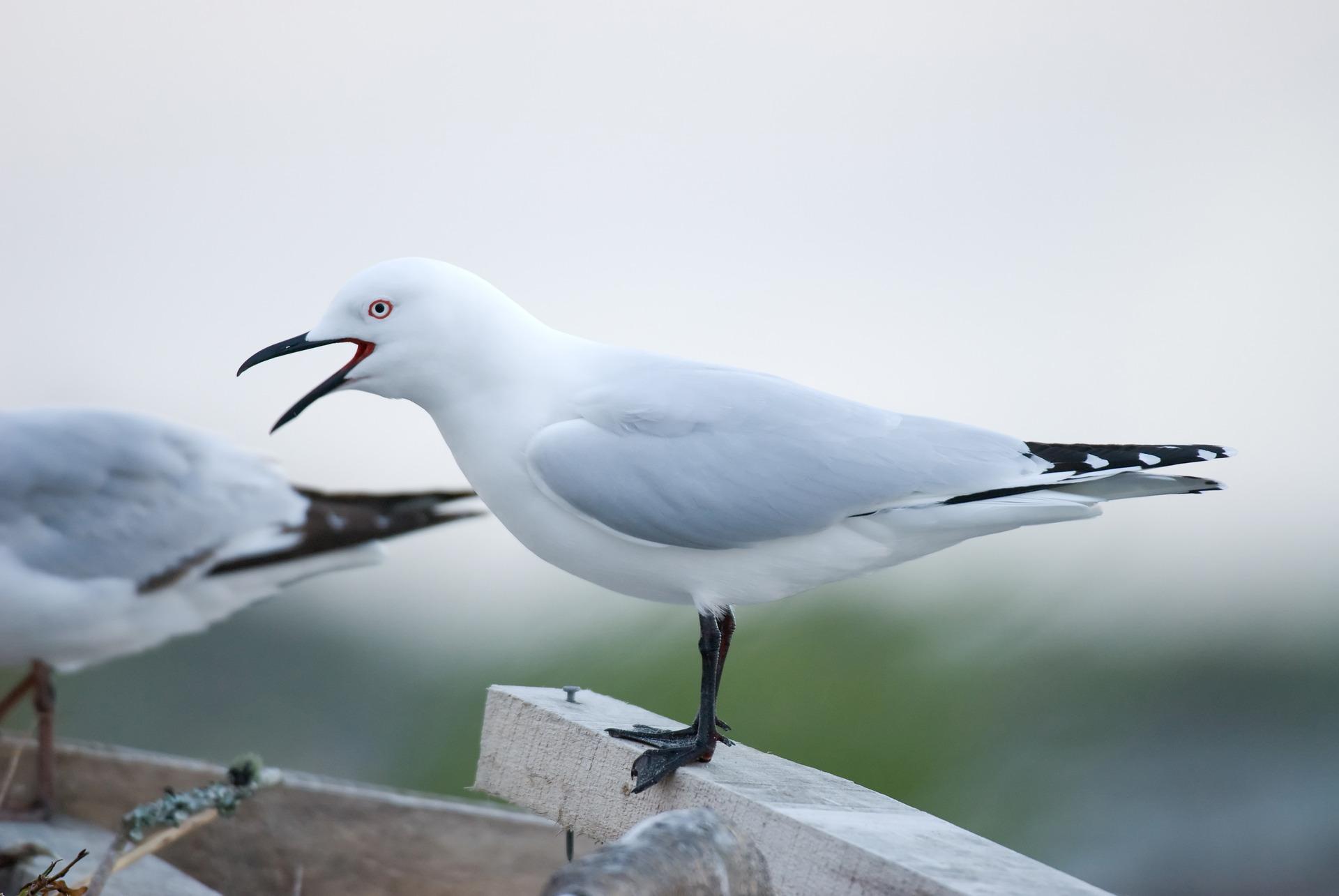 Men spoken to over deaths of black-billed gulls at Sulphur Point in Rotorua