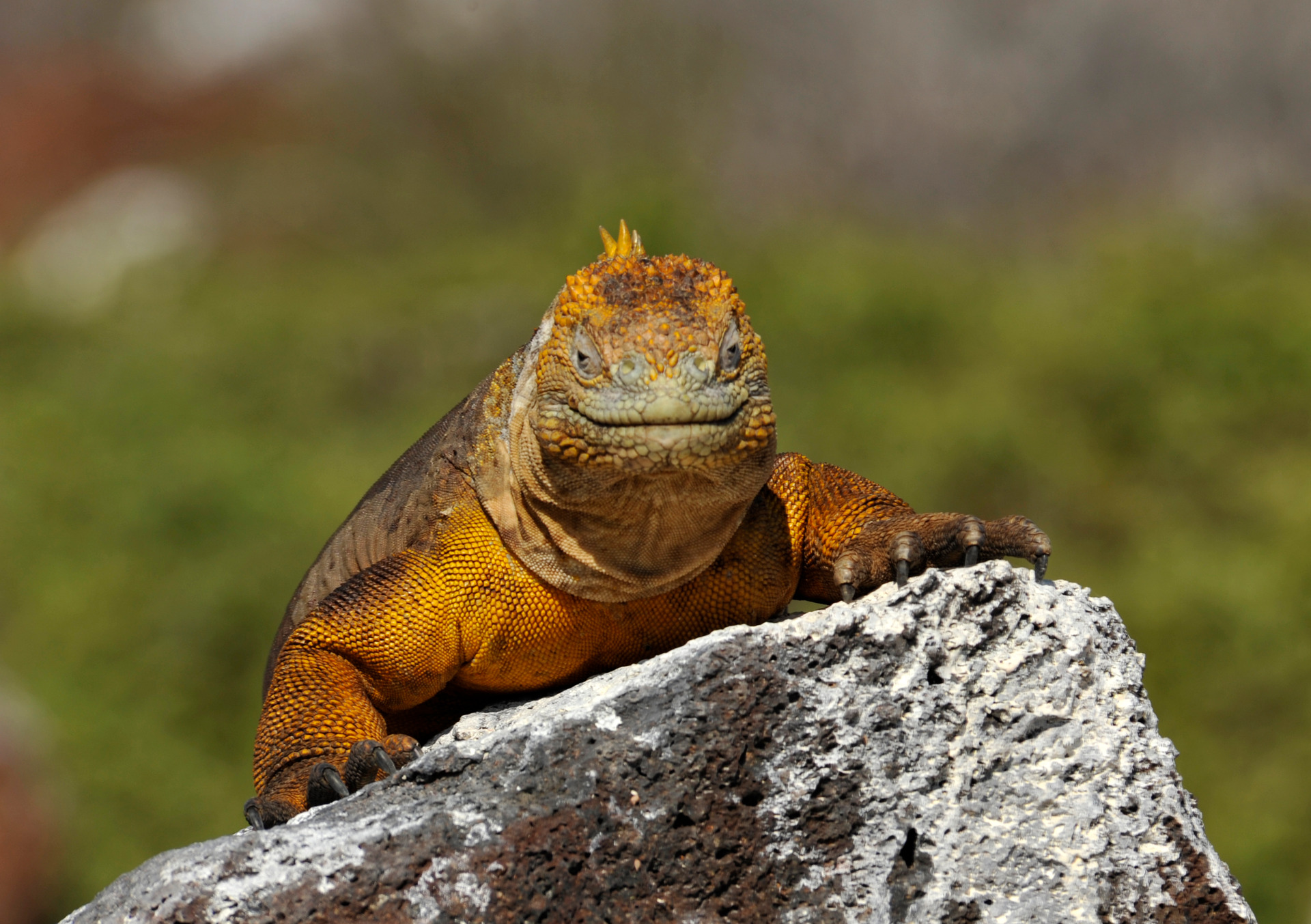 Galapagos Islands' first resort given green light