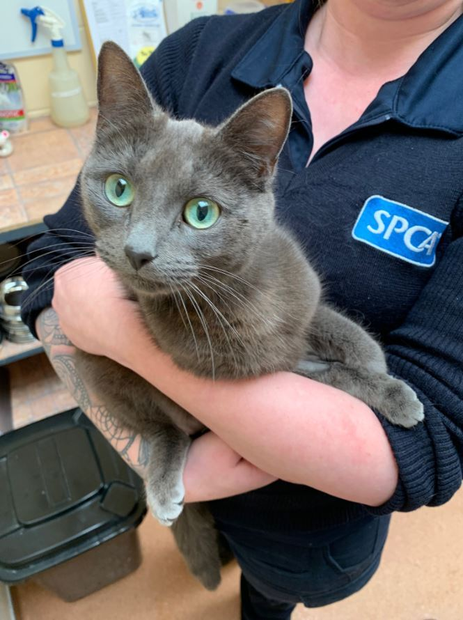 SPCA investigate after cat's 'miracle' survival