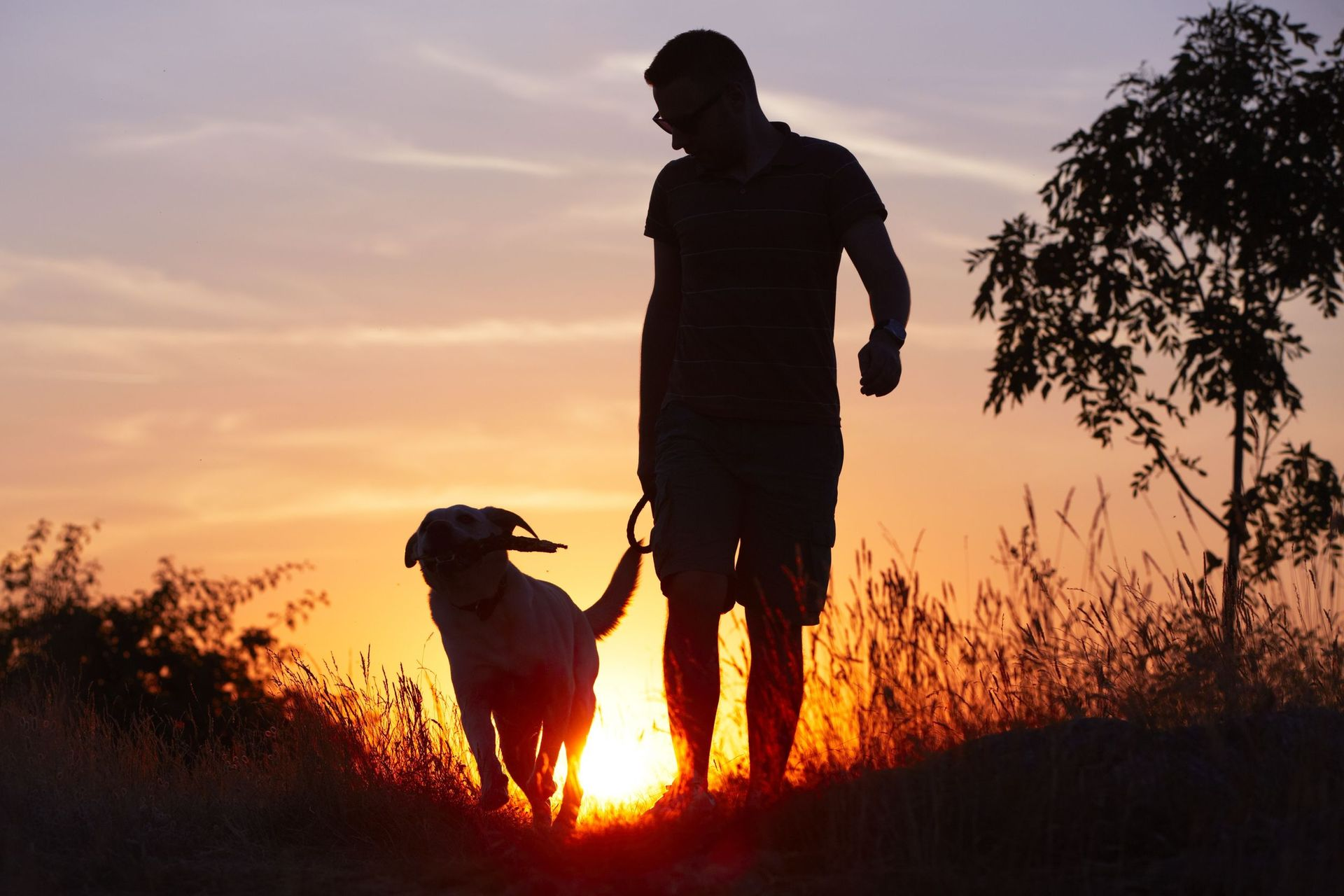 A healthy man was licked by his dog. He was dead within weeks