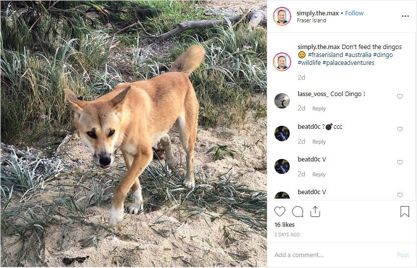 Fraser Island tourists brag about dingo encounters after toddler attack