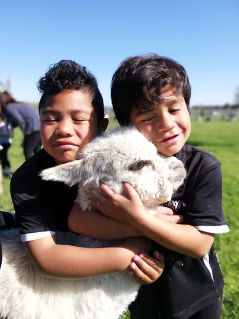 First time on a farm: Flaxmere school kids launch into heartwarming alpaca hugs on school trip