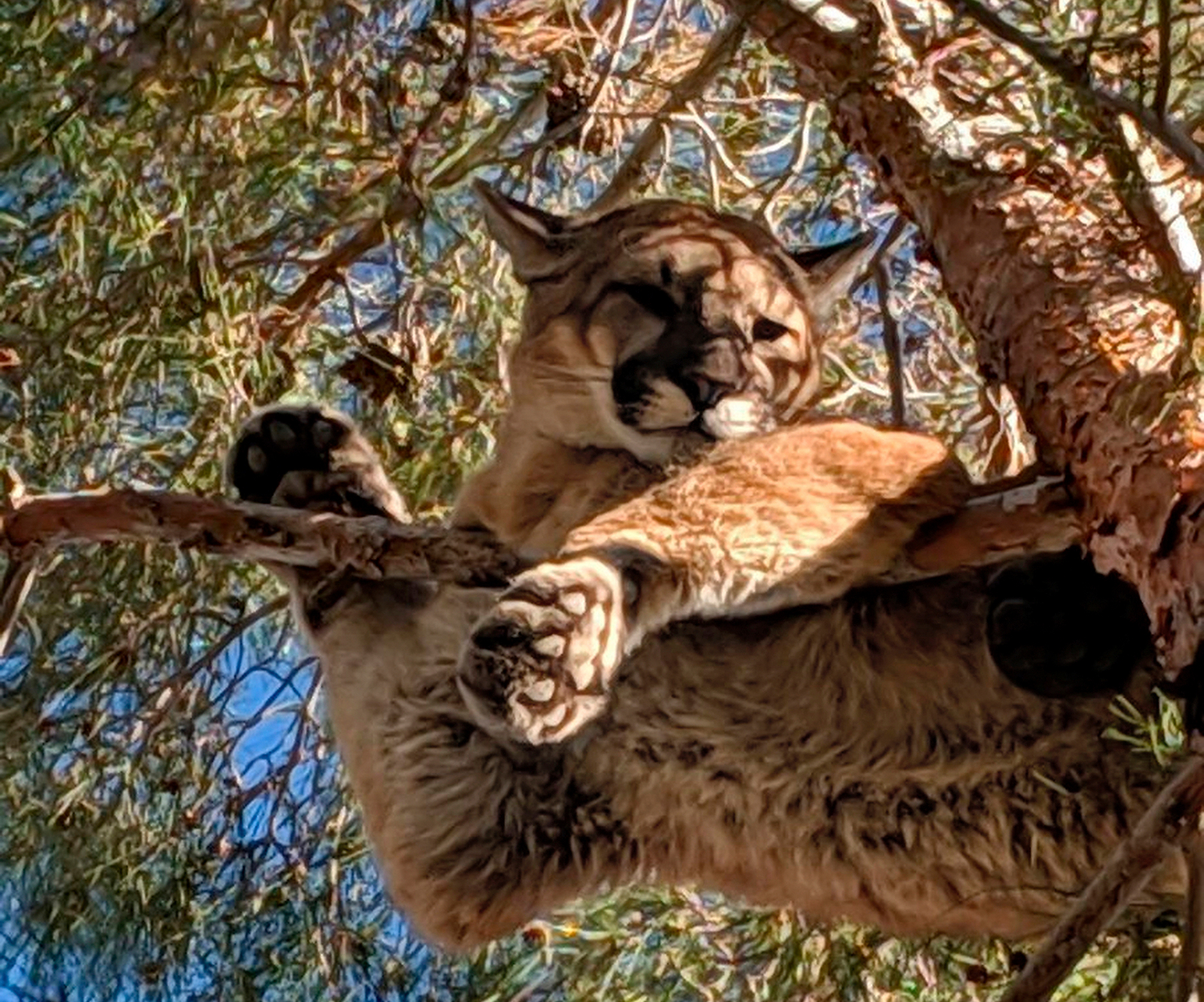 Help! There's a (big) cat stuck in a tree