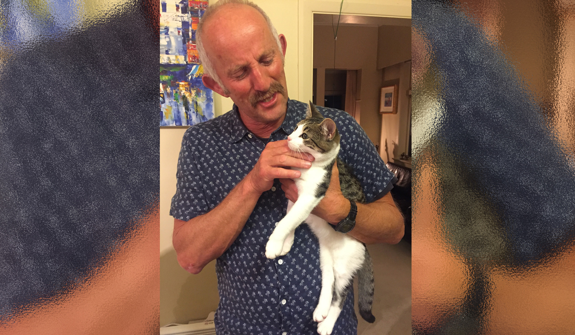 Barry Soper: Aeroplane anxiety - what it's like to fly with Gareth Morgan the cat