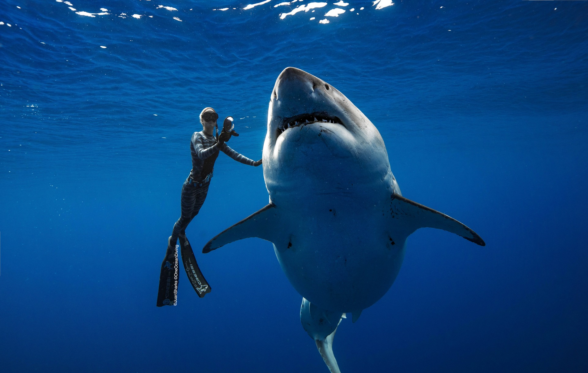 Watch: Incredible footage and photos of great white shark encounter