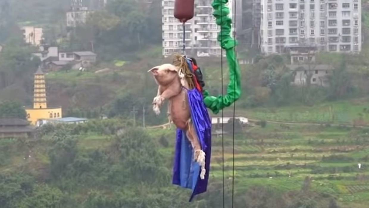 Theme park's bungee-jumping pig stunt sparks anger