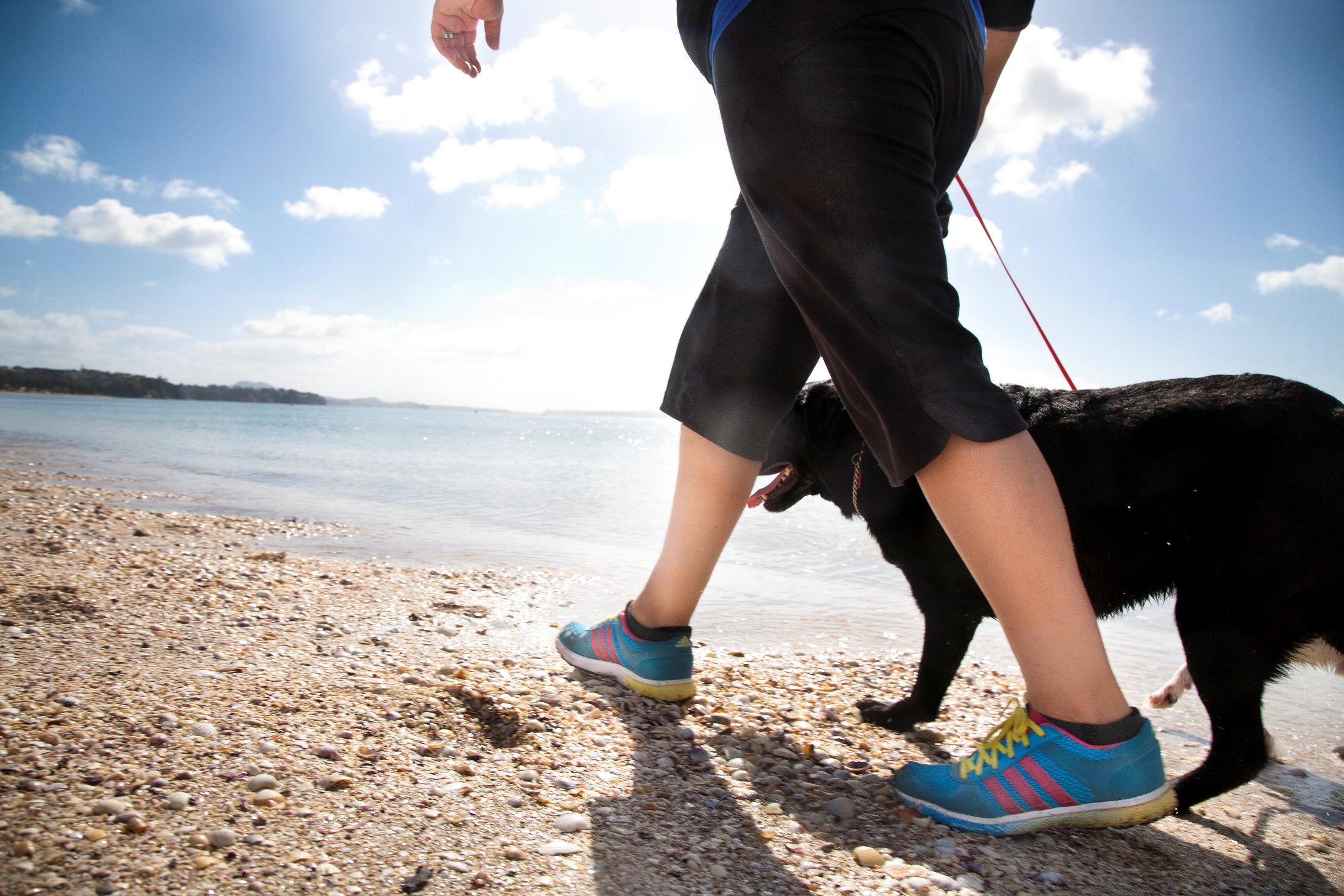 Top places for walking the dog - NZ Herald e459933625ee