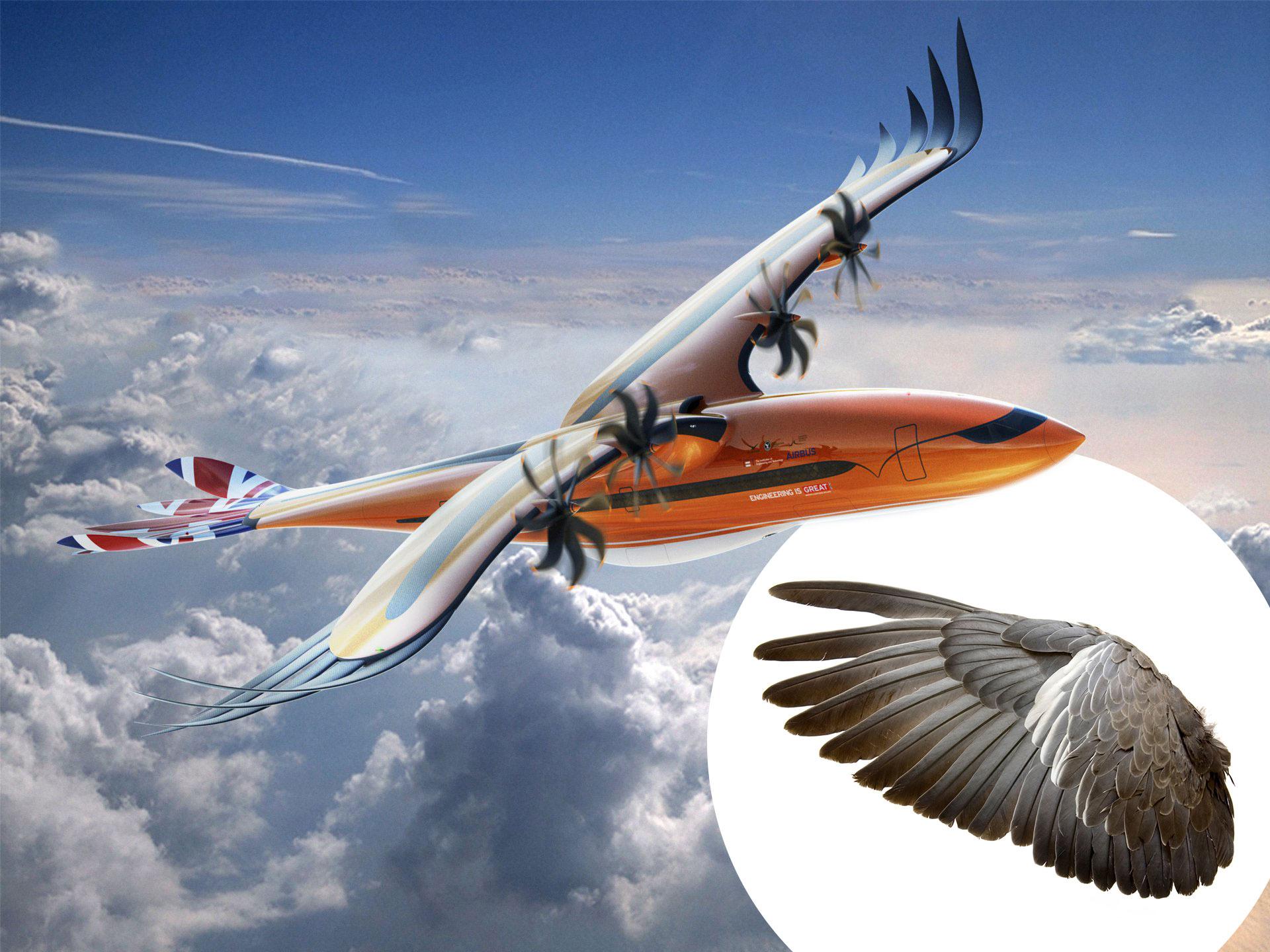 Future of flight looks to nature in Airbus 'bird of prey' design