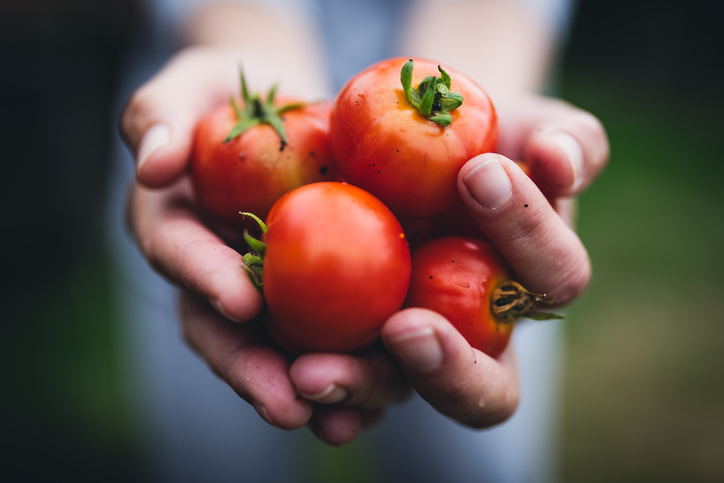 Tomatoes hit lowest ever price in June