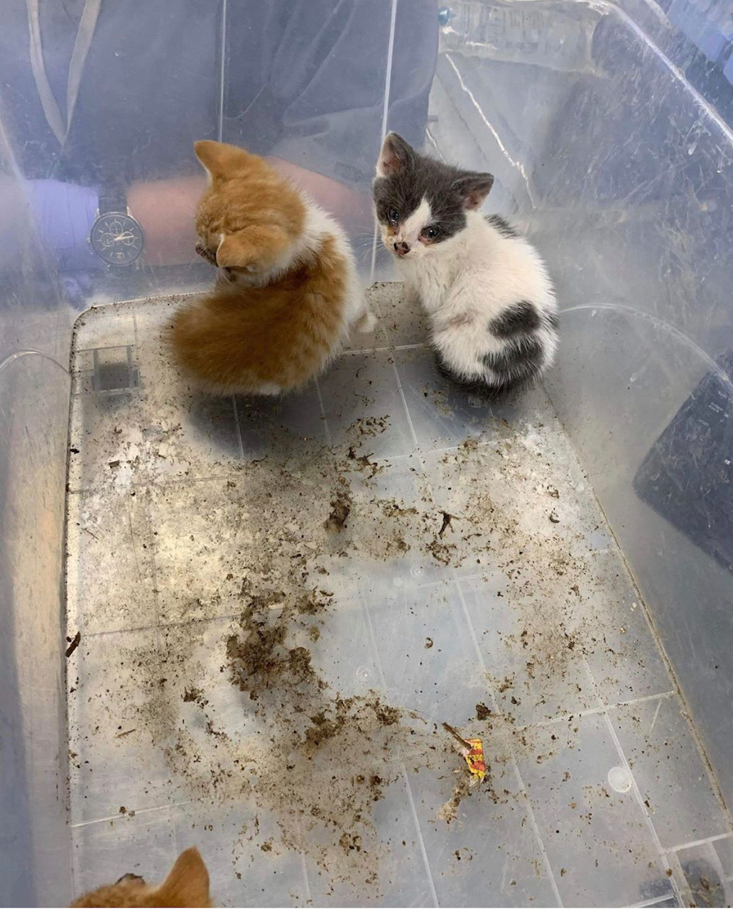 Disfigured kittens found in a 'terrible state' dumped in box