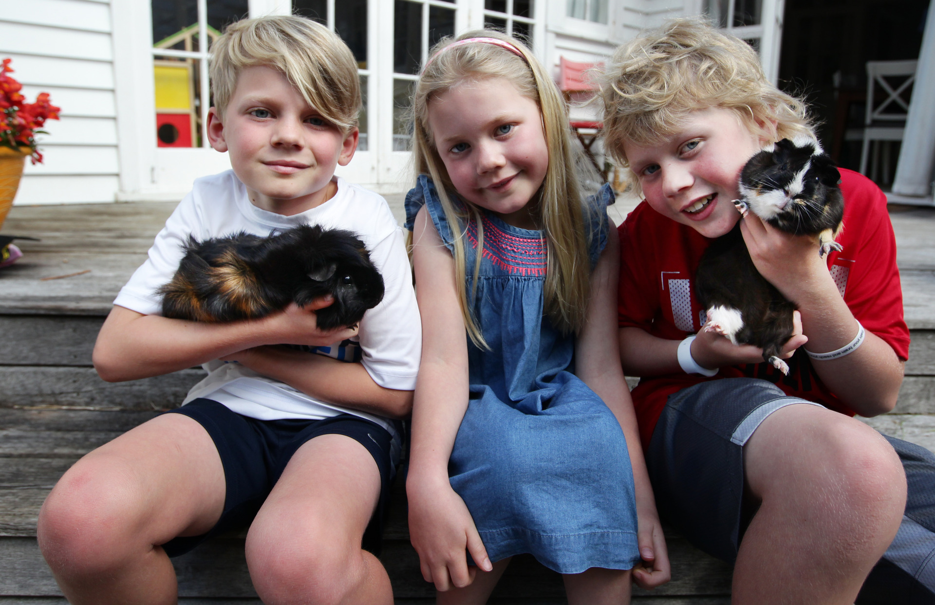 The great guinea pig escape: Family in disbelief over guinea pig's bumper 17km ride to airport