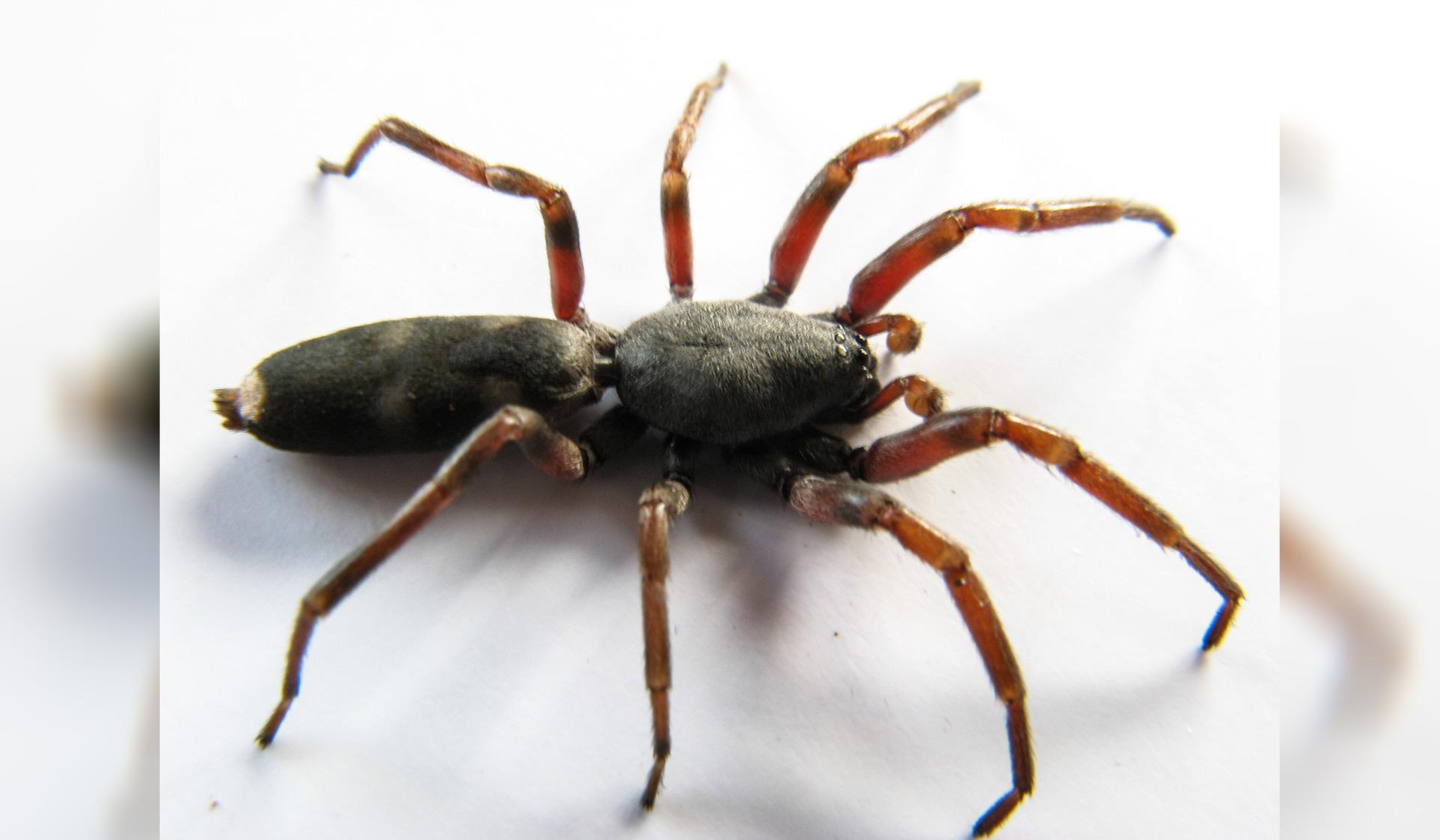 Head-on crash blamed on spider sighting