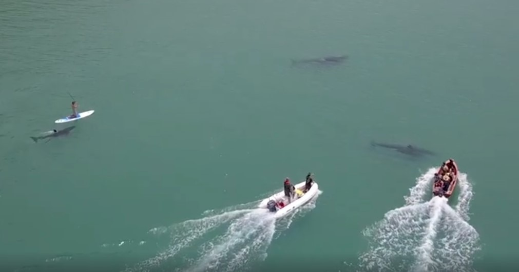 Appeal for information after orca harassed at Helena Bay