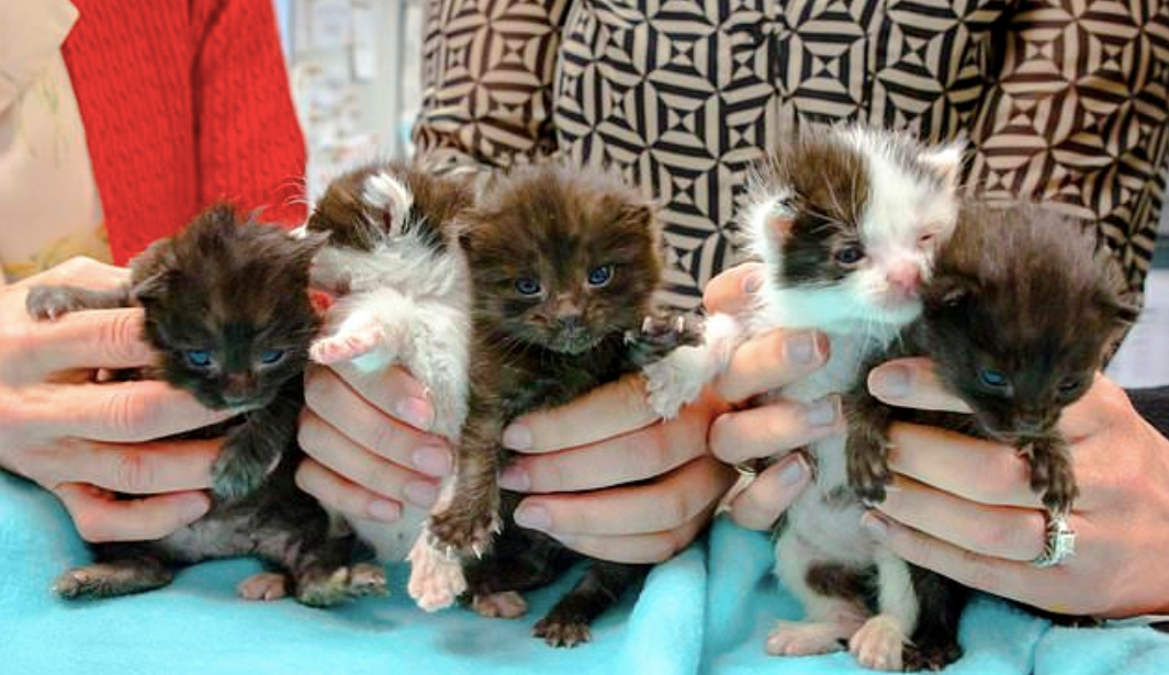 Photos: Kitten stowaways found after long journey in steel column