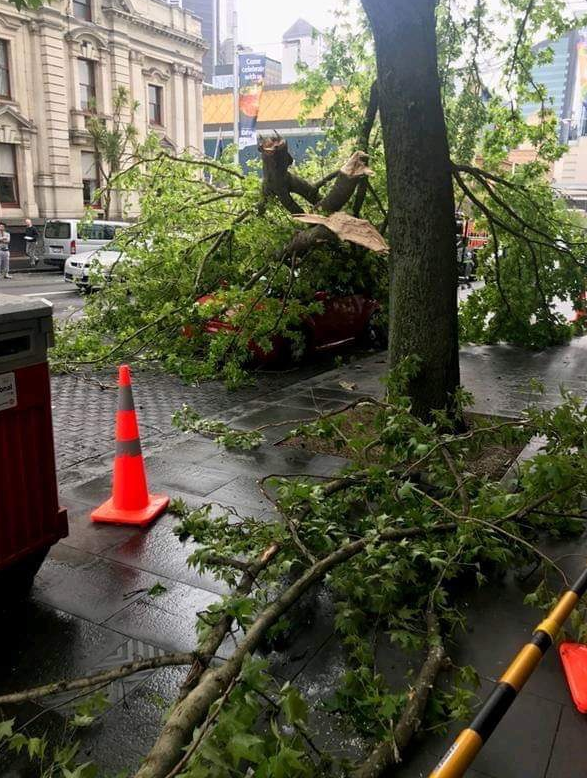 Branch from giant Queen St tree snaps, covers car