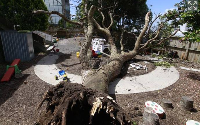 Dead tree toppled on toddlers: Discoveries Educare fined more than $210,000