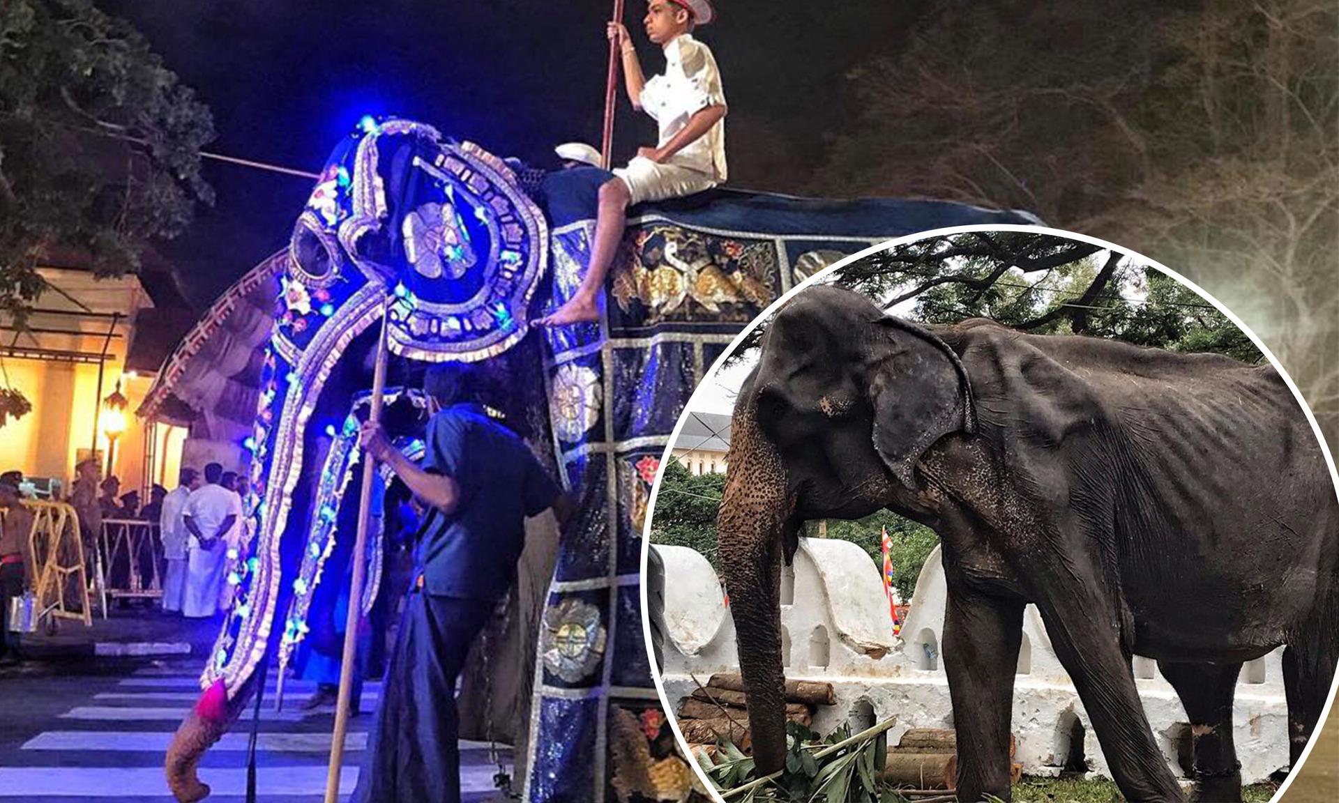 Starved Tikiiri the elephant collapses during Sri Lanka festival