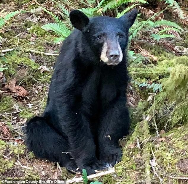 Baby bear killed by wildlife officials after it became too friendly with humans
