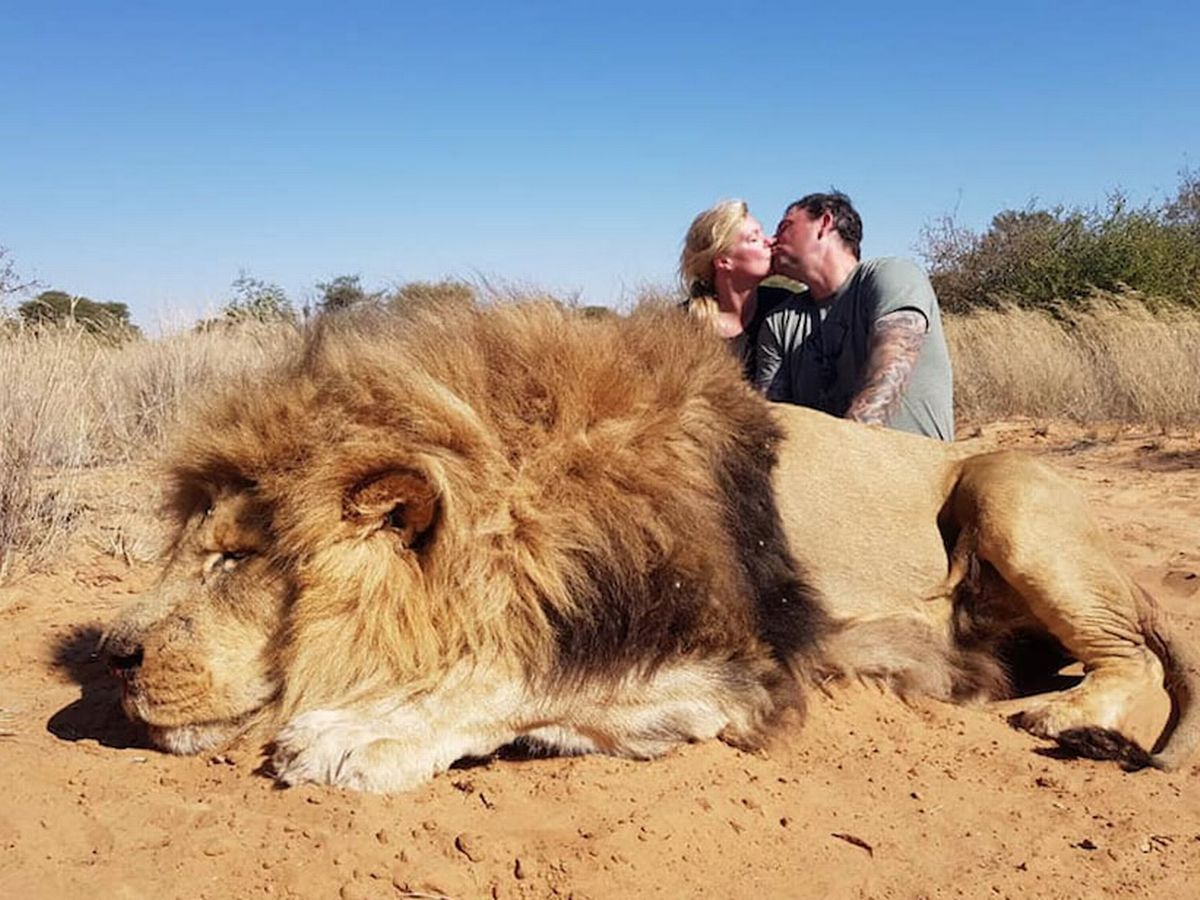 Photo of Canadian couple kissing over lion they shot dead sparks outrage