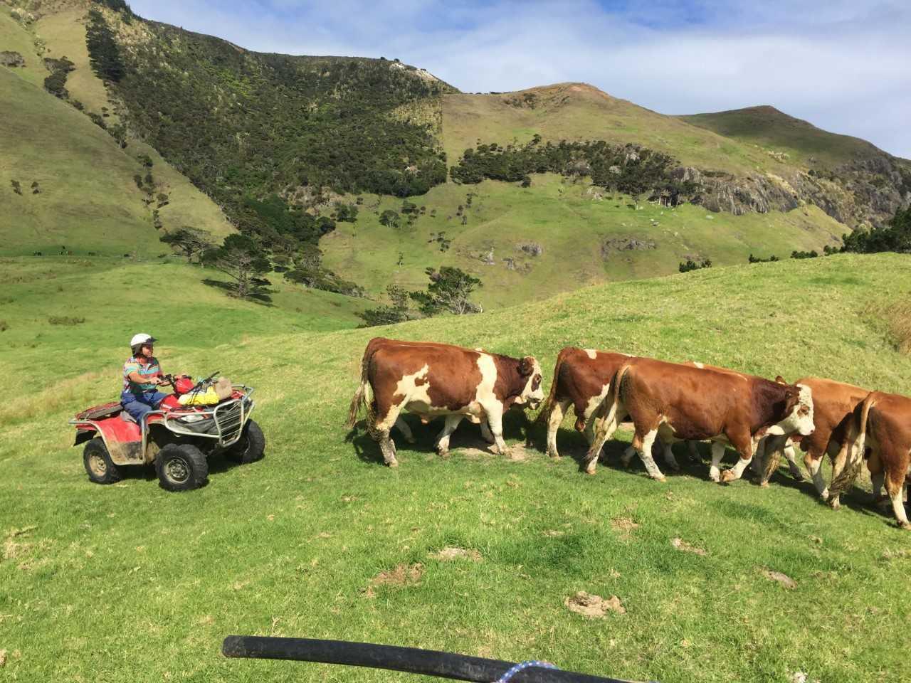 China overtakes US as biggest buyer of NZ beef