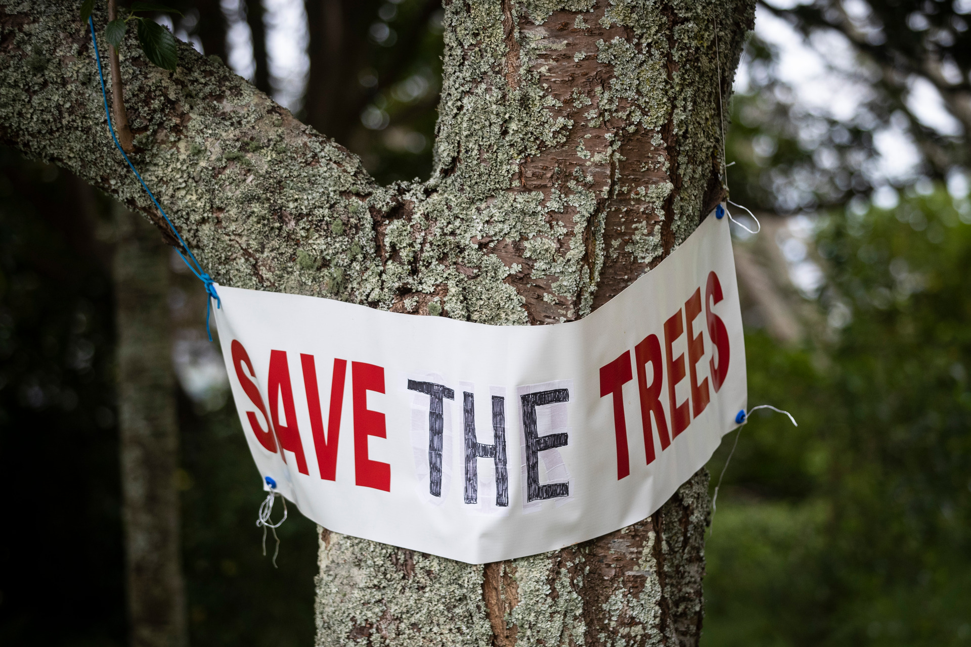 Legal bid to stop removal of trees from Auckland maunga