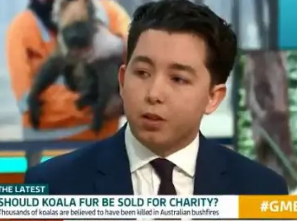 Businessman's fundraising plan for dead koalas slammed