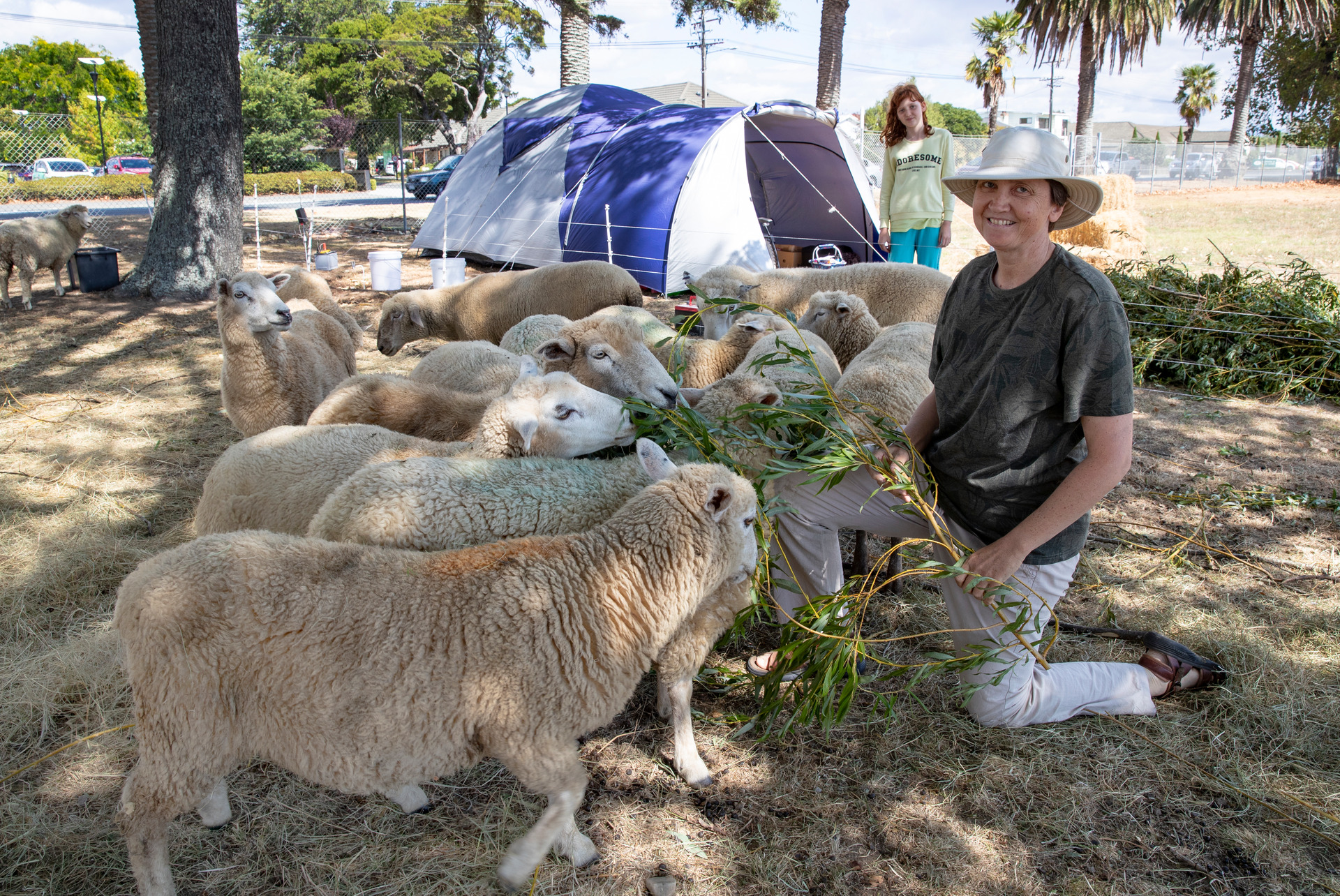 Nelson bush fire evacuees camp out with their sheep - NZ Herald