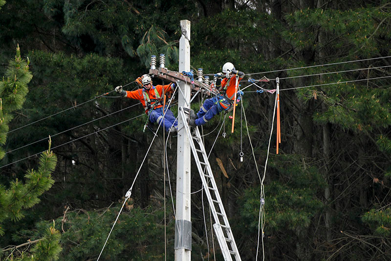 Forestry mishap cuts power to hundreds in rural areas south of Rotorua